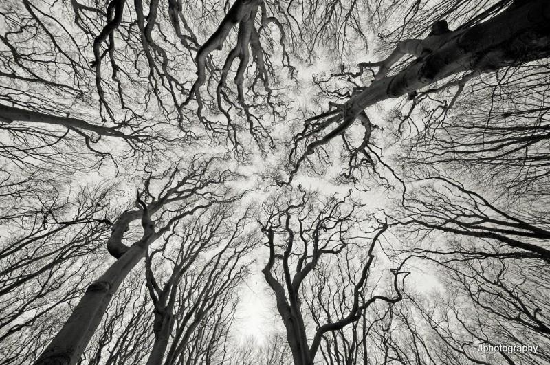 FractalTrees
