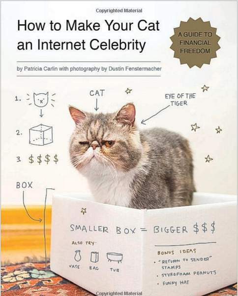 HowToMakeYourCatAnInternetCelbrity